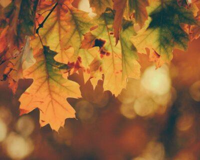 Filastrocca autunnale per spiegare la stagione ai bambini
